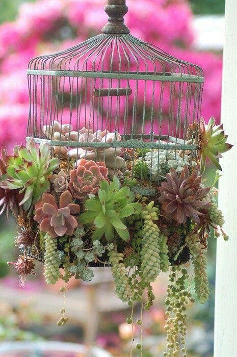 plantas en jaula