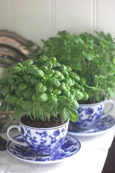 planta en taza