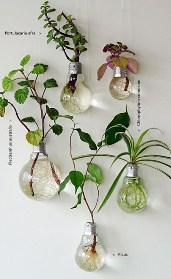 reutilizar bombillas