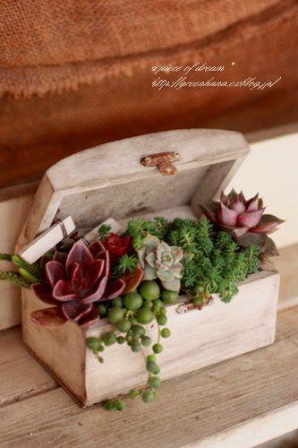 plantas en cofre